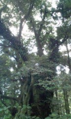さとうゆみ 公式ブログ/森へ 画像2