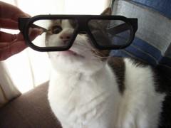 さとうゆみ 公式ブログ/カピバラと3Dメガネとコスモスの休日 画像2