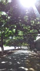 さとうゆみ 公式ブログ/アラワイ運河の横の並木道 画像1
