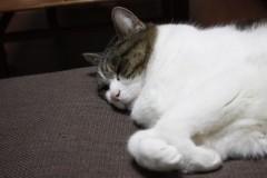 さとうゆみ 公式ブログ/ねるネコは育つ 画像2