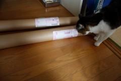 さとうゆみ 公式ブログ/桜プロジェクト〜お届け開始〜 画像2