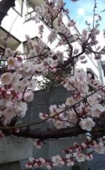 さとうゆみ 公式ブログ/へそ天と梅 画像3