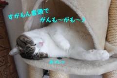 さとうゆみ 公式ブログ/みーくんの昼寝。 画像1