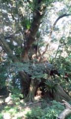 さとうゆみ 公式ブログ/御蔵島の大ジイ 画像1