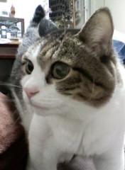 さとうゆみ 公式ブログ/ヒト動き、ネコ・・・ 画像1