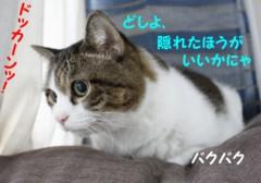 さとうゆみ 公式ブログ/クイズ2の答え〜こわがりみーくん〜 画像3