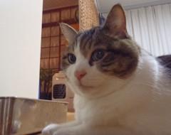 さとうゆみ 公式ブログ/破壊王 画像1