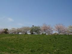 さとうゆみ 公式ブログ/桜の下で 画像2