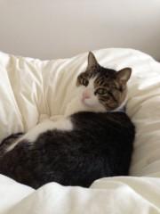 さとうゆみ 公式ブログ/ヒトの手も借りたいネコ 画像3