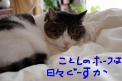 さとうゆみ 公式ブログ/今年の抱負 画像1