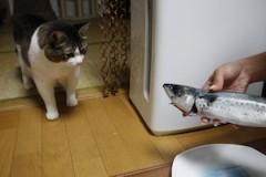さとうゆみ 公式ブログ/「イカ釣り」リベンジ 画像3