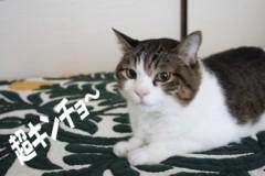 さとうゆみ 公式ブログ/迷ホスト 画像2