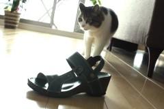 さとうゆみ 公式ブログ/今年のサンダル 画像2