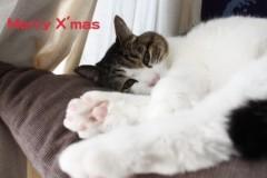 さとうゆみ 公式ブログ/メリークリスマス! 画像2