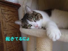さとうゆみ 公式ブログ/新入りのみどりくんたち 画像3