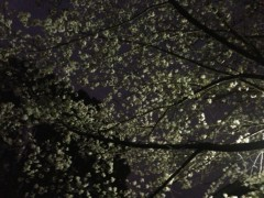 さとうゆみ 公式ブログ/お花見 画像2