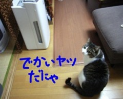 さとうゆみ 公式ブログ/空気清浄機 画像2