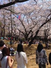 宇治一世 公式ブログ/飛鳥山でお花見☆ 画像1
