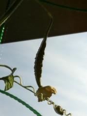 Kanna 公式ブログ/花が咲いたら… 画像1