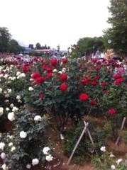 菱沼美波 公式ブログ/薔薇 画像1