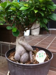 菱沼美波 公式ブログ/幸福の木 画像2