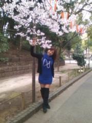 阿川祐未 公式ブログ/桜咲いてるよ! 画像2