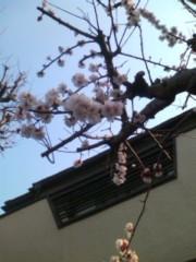 阿川祐未 公式ブログ/今週もお花見があります 画像1