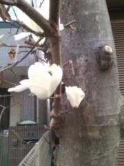 阿川祐未 公式ブログ/今週もお花見があります 画像2