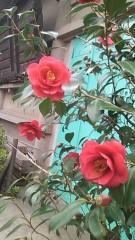 阿川祐未 公式ブログ/ね…眠い… 画像1