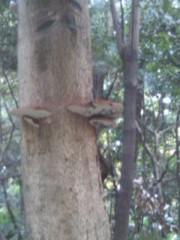 阿川祐未 公式ブログ/昔飼ってた亀の名前はパクパクでした。 画像1