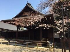 丸岡真由子 公式ブログ/桜の開花宣言どす 画像1