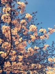 丸岡真由子 公式ブログ/すばらしい日々どす 画像2