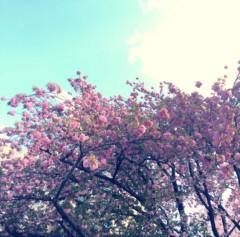 丸岡真由子 公式ブログ/八重の桜の季節どす 画像1