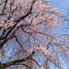 丸岡真由子 公式ブログ/新たなるスタートの四月どす 画像3