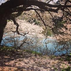 丸岡真由子 公式ブログ/新たなるスタートの四月どす 画像2