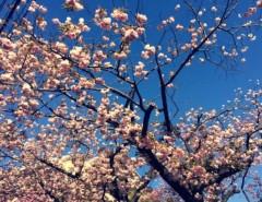 丸岡真由子 公式ブログ/八重の桜の季節どす 画像2
