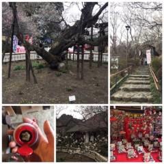丸岡真由子 公式ブログ/2月の花といえば。。どす 画像2
