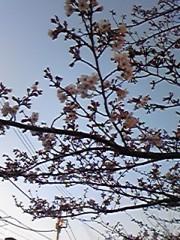伊藤真奈美(アズライト) 公式ブログ/春* 画像1