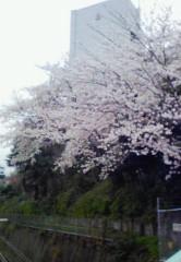 快信孝(チックタックブーン) 公式ブログ/桜で桜餅 画像1
