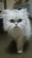 あいざき進也 公式ブログ/今日は猫の日 画像1