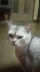 あいざき進也 公式ブログ/今日は猫の日 画像3
