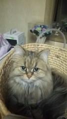 あいざき進也 公式ブログ/今日は猫の日2 画像1