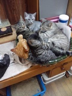 猫山盛り!