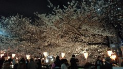 甘糟記子 公式ブログ/夜桜 画像1