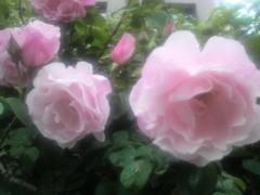 芝崎昇 公式ブログ/上を向いて歩こう 画像3
