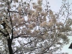 芝崎昇 公式ブログ/( ̄◇ ̄*)エエエェェッ 画像3
