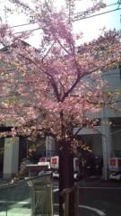 白 公式ブログ/これ梅かい? 画像1