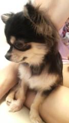 野本愛弓 公式ブログ/きょうのわんこ 画像1