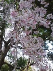 綾乃(かぐや) 公式ブログ/桜の木の下の幸せ( よう子) 画像3