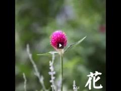 綾 プライベート画像 61〜80件 hana_mo2